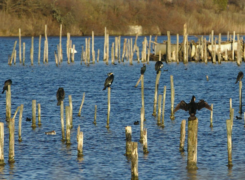 La réserve ornithologique du Teich