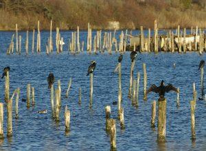 Réserve Ornithologique