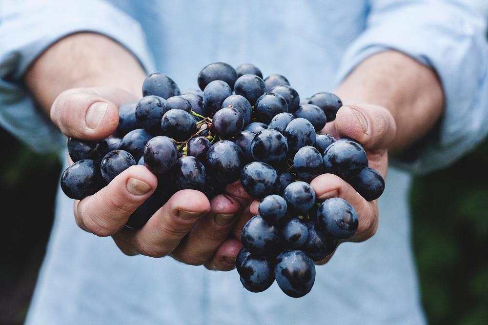 La Fête du raisin de Fréjus