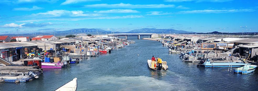 Découvrez Port Leucate et son centre ostréicole